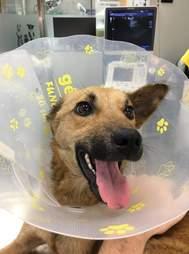 Dog in cone of shame at vet