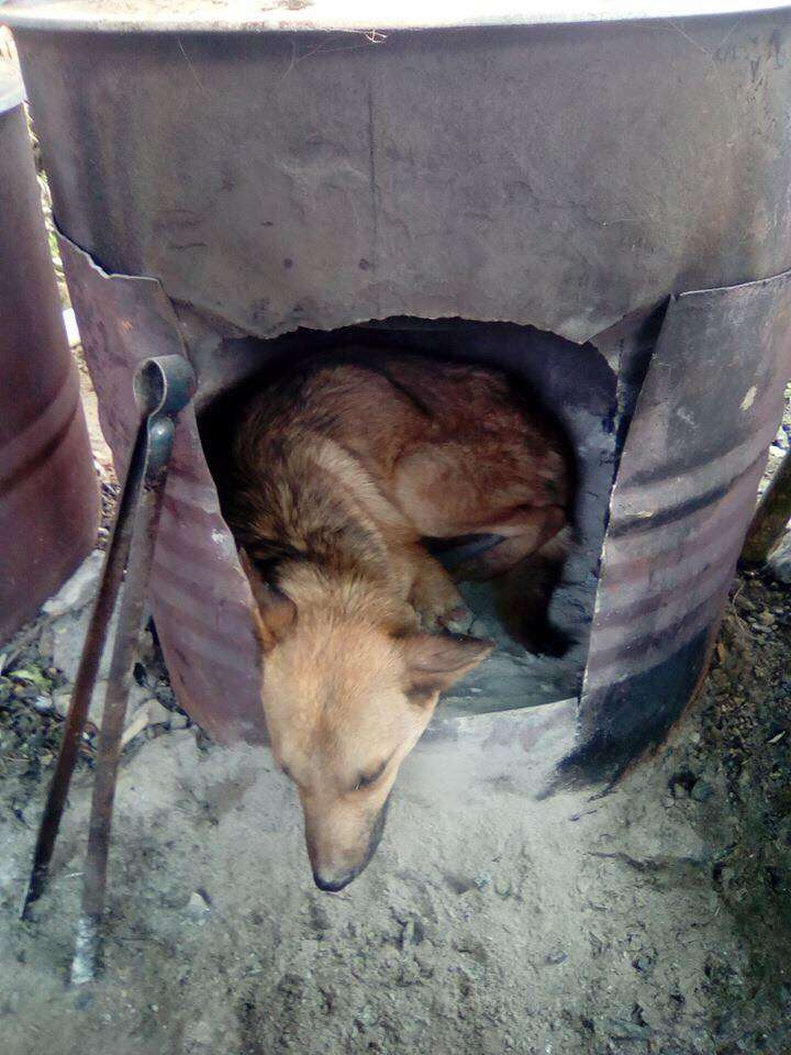 Injured dog sleeping in kiln