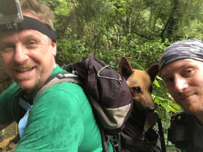 Hikers with dog in their backpack