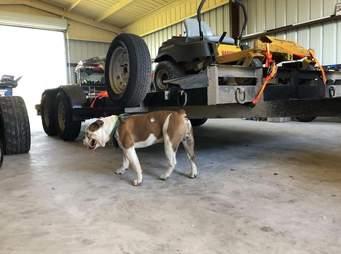dog climbs into man's truck