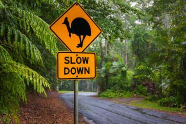 dangerous cassowary australia