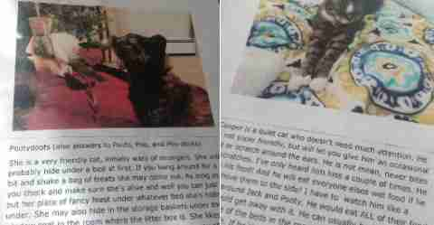 Pictures of cat biographies left for the pet sitter