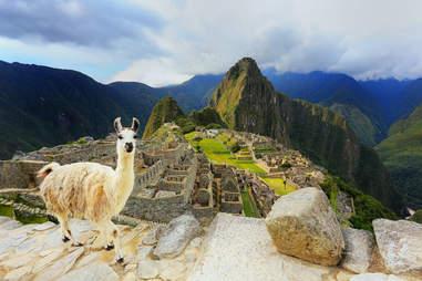 llama and Matchu Picchu