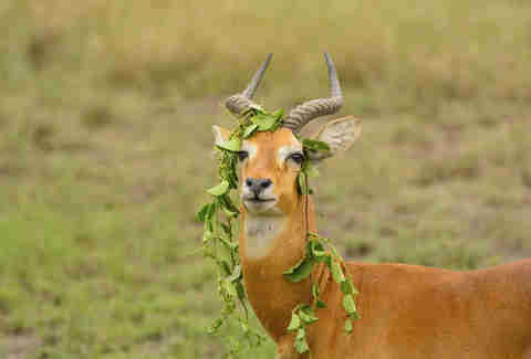 animal with leaves on head