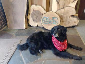 stray dog rescue georgia