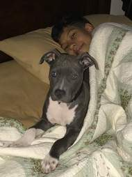 Dog sleeping in bed with boy