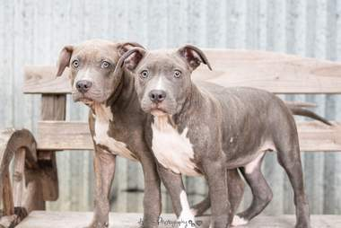 Dogs standing on bench together