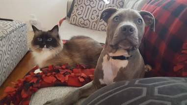 Cat and dog lying on couch together