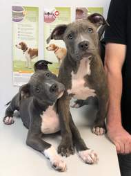Puppies recovering from mange