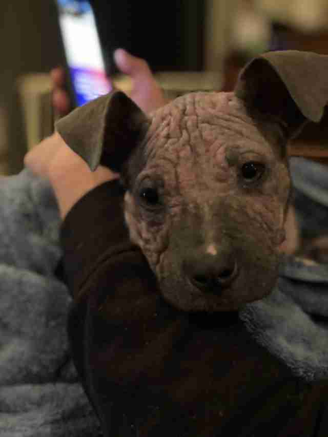 Person cuddling puppy with mange