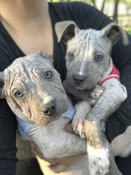 Dogs with mange in onesies