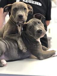 Puppies standing on wooden bench together