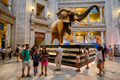 people admiring elephant in museum