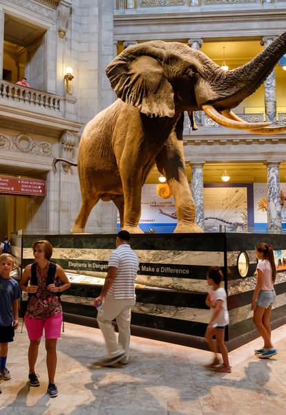 people admiring elephant in museum