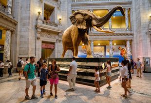 The All-Time Best Museums Worth Visiting in DC