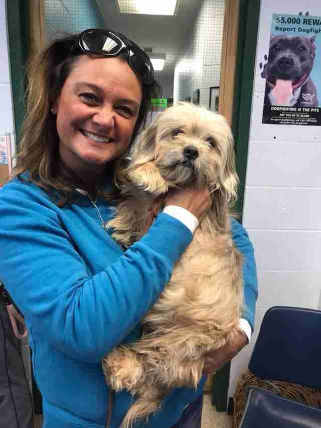 matted shih tzu rescue indiana