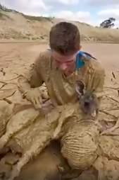 kangaroo rescue australia