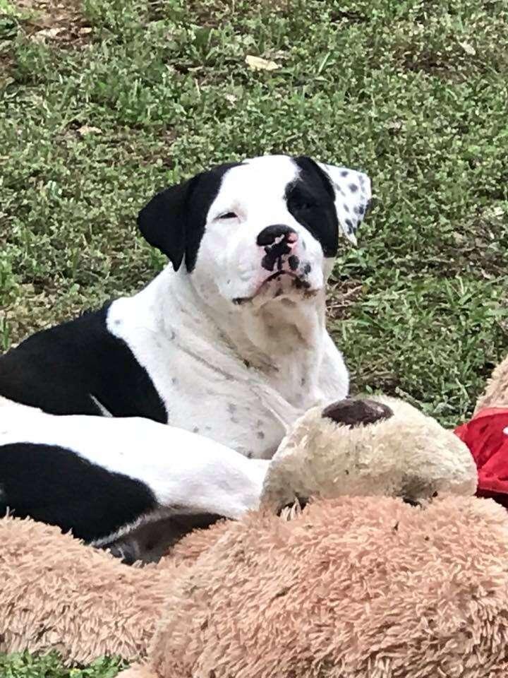 Dog with teddy bear on grass