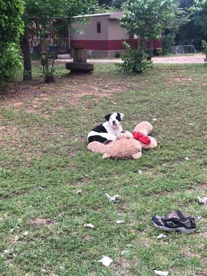Dog with teddy bear lying in grass