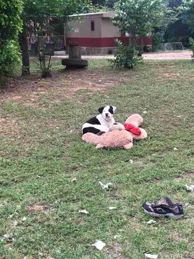 Dog with teddy bear lying in grass