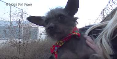 dog and puppies found on streets of Los Angeles