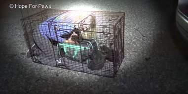 dog and puppies found on the streets of Los Angeles