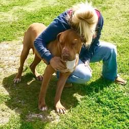 neno texas dog gets new home