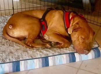 Texas dog neno gets new home