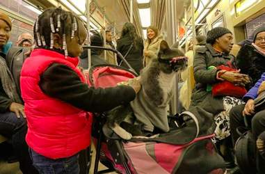 special needs cat wears sunglasses