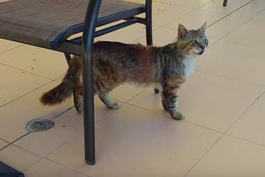 A stray cat in Greece
