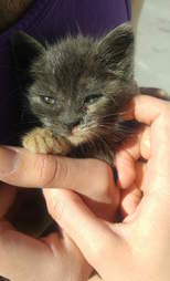 Aggie the kitten found in a hotel garbage pile