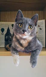 Aggie the rescue cat arrives in England