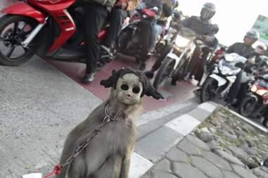 monkey mask abuse indonesia