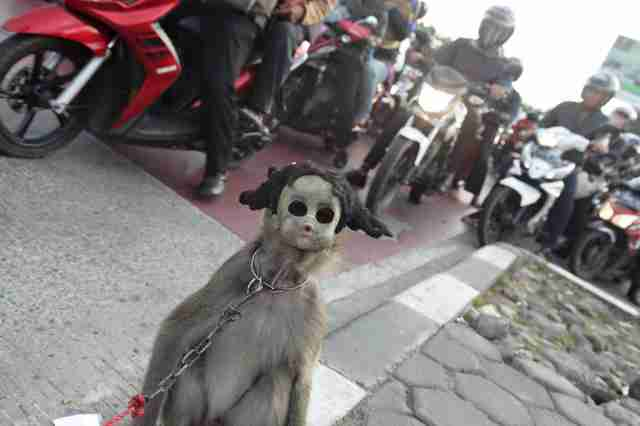 monkey mask abuse indonesia
