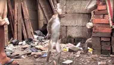 monkey mask indonesia abuse