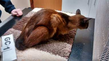 cats found in terrible conditions