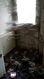 cats kept in horrible conditions