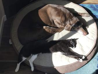 dog and cat cuddle for the first time in 13 years