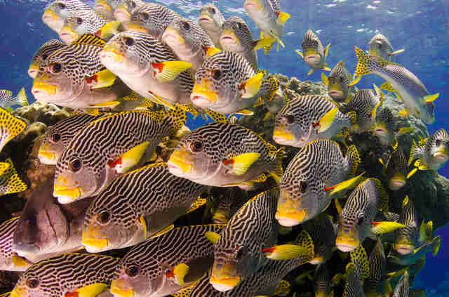 School of fish in Australia's Great Barrier Reef