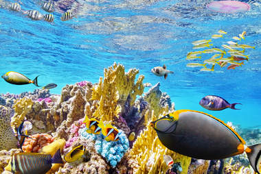 Colorful fish in the Great Barrier Reef in Australia