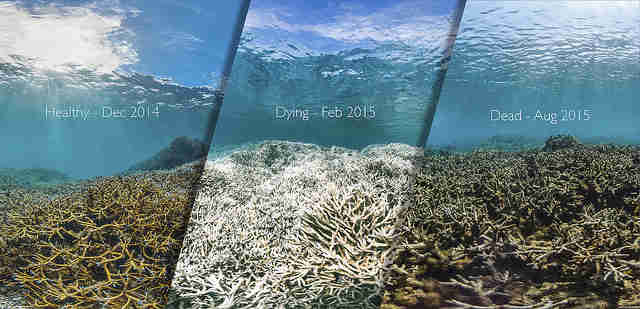 Coral reefs in process of dying