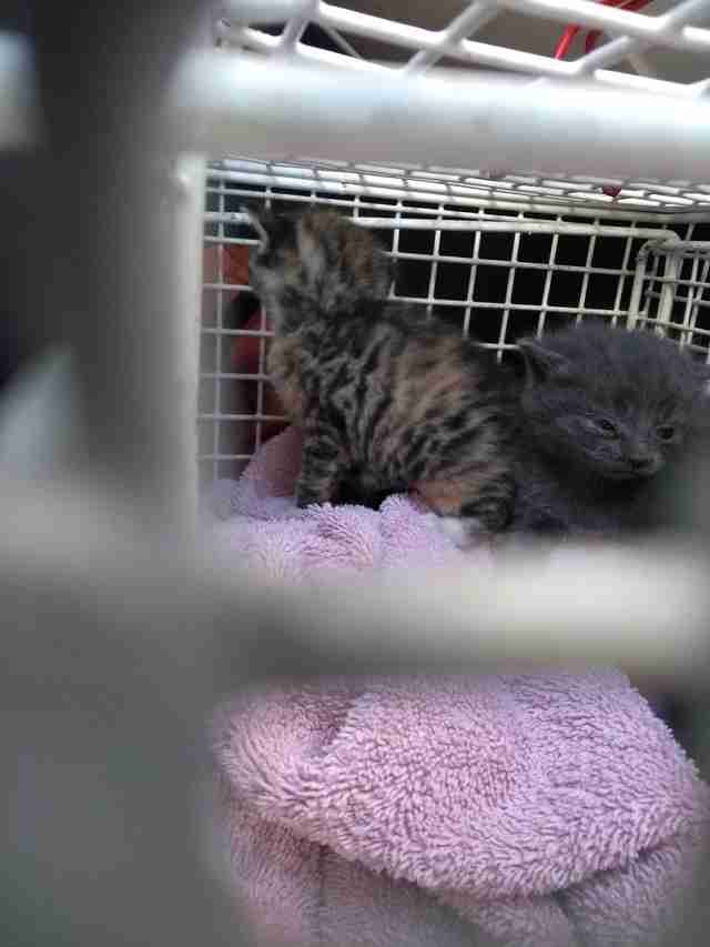kittens trapped between two walls rescued