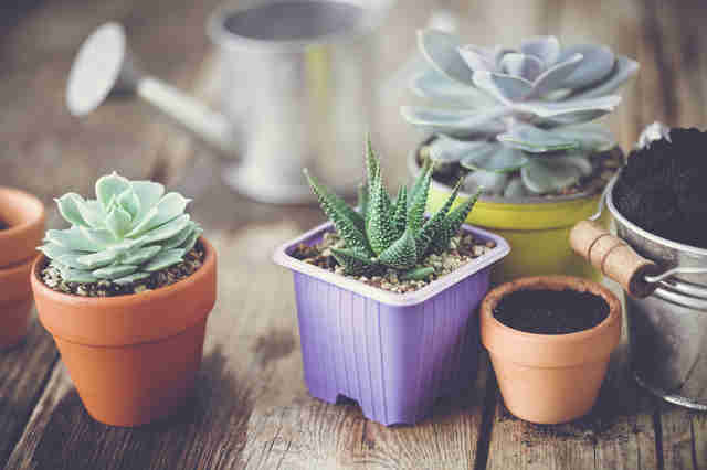 how to care for succulents tips for keeping your succulents alive thrillist. Black Bedroom Furniture Sets. Home Design Ideas