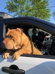 Dog inside police car