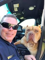 Police officer posing with pit bull-type dog