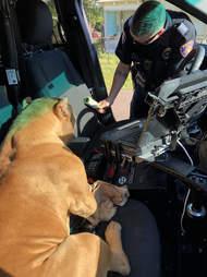 Pit bull sitting in police car