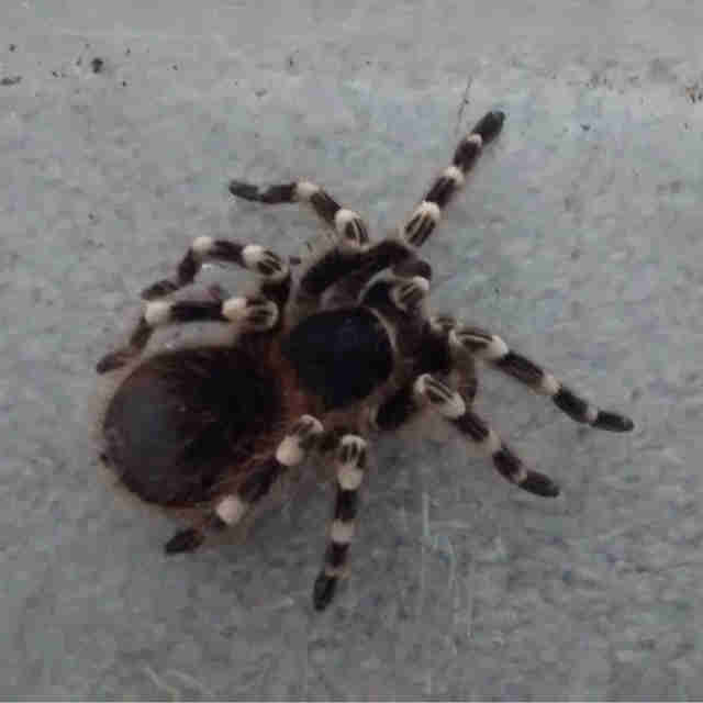 tarantula found in dumpster