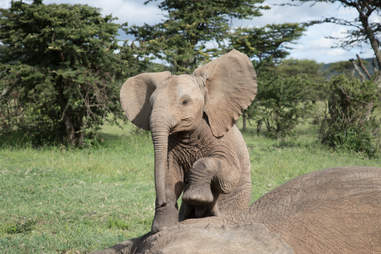 Baby elephant at his friend's side