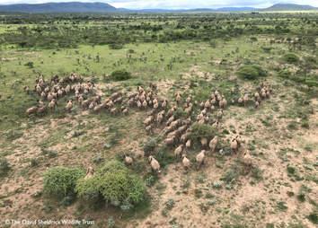 Herd of elephant running through the savannah