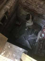 Dog trapped in basement